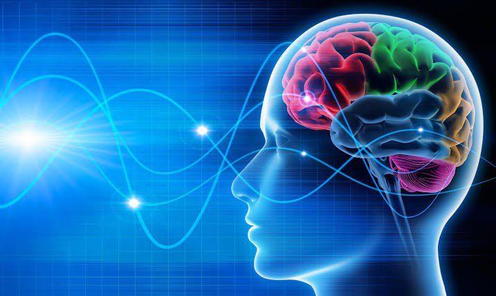 O que cultura tem a ver com neurociência?